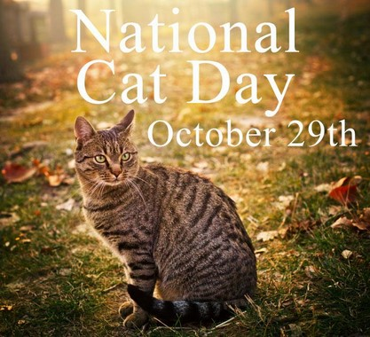 national-cat-dayOct-29