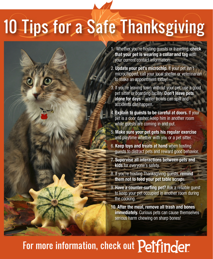 thanksgiving-10-tips