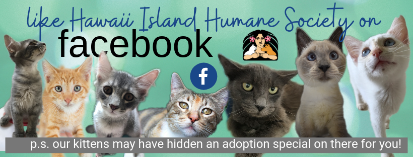 Follow Hawaii Island Humane Society on Facebook 4